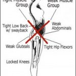 effects of tight muscles on hip & lower back