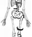 effects of hip dysfunction on rest of body